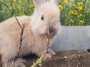 Kaninchen M W
