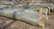 Brennholz Stämme Starkholz