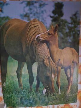 Pferdeposter 79 x 82 cm
