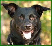 Ucki - Mischling - 1 Jahr - Tierhilfe