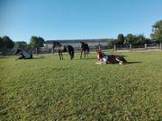 Ranch mit Reithalle und Herdenhaltung