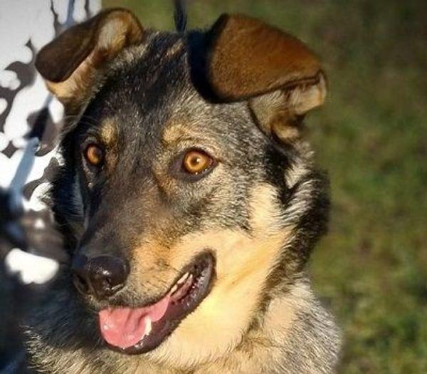 ALESCH - kinderliebender aktiver Familienhund