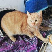 Liebes Kätzchen Rufina sucht ihre