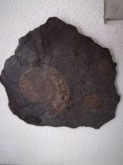 Fossil auf Stein