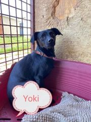 Yoki sucht sein endgültiges Zuhause