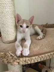 Katzenjunge Taki wartet auf Dich