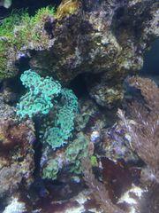 Meerwasseraquarium 300 Liter