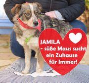 Tierschutz Die liebe Jamila sucht