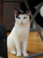 Blue und Eyre zwei Katzenschönheiten