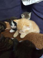 Katzenbabys gegen eine Schutzgebühr abzugeben