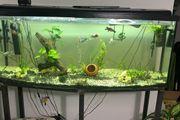 400 Liter Aquarium komplett mit