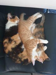 Katzenbaby rotes Katerchen