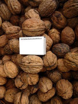 Walnussbaum Walnuss junger Baum junge: Kleinanzeigen aus Sinsheim - Rubrik Pflanzen