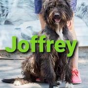 Terrier-Mix-Rüde Joffrey