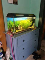 120 L Aquarium mit Zubehör