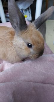 3 Baby Kaninchen mit Käfig