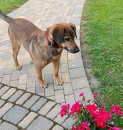 PAULCHEN-CURTI - ein Männerhund braucht eine