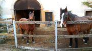 Bieten Offenstallplatz für verträgliches Pferd