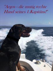 SchutzHund CHAMPION-EDEL-Mix SECURITY DOG HausHund