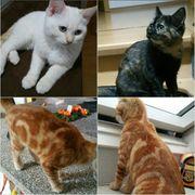 4 Bengal Katzen suchen ein