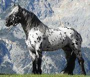Suche Traum Pferd