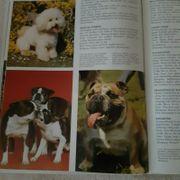 Das große Hundebuch Gebundenes Buch
