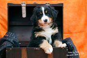 Tierbetreuung in gewohnter Umgebung