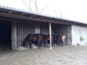 Suche Urlaubsvertretung für Pferdestall