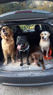 Hundebetreuung Hundesitter