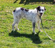 Herzenshund Timi - stille Wasser gründen