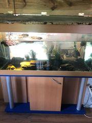 verkaufe Aquarium und 3 Wasserschildkröten