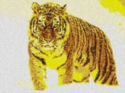 Vorlage für Ministeck Tiger im