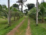 Brasilien 304 Hektar Tiefpreis - Land