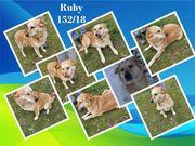 Ruby sucht ihr Körbchen