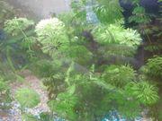 Schöne Aquarium Pflanzen
