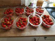 Erdbeeren BIO von Garten