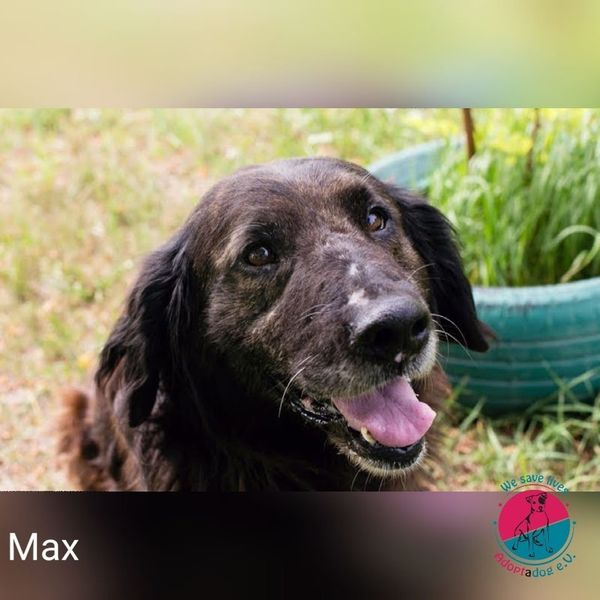 Max - War auf einmal einfach