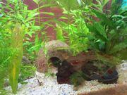 Nano -Aquarium 30 L mit