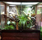 Terrarium mit wunderschönem Gecko