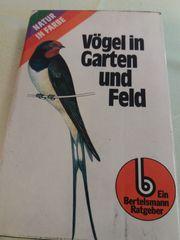 Vögel in Garten und Feld