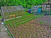 Wiese Garten mit Hütte Wald