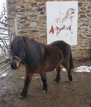 kleine süße Ponystute