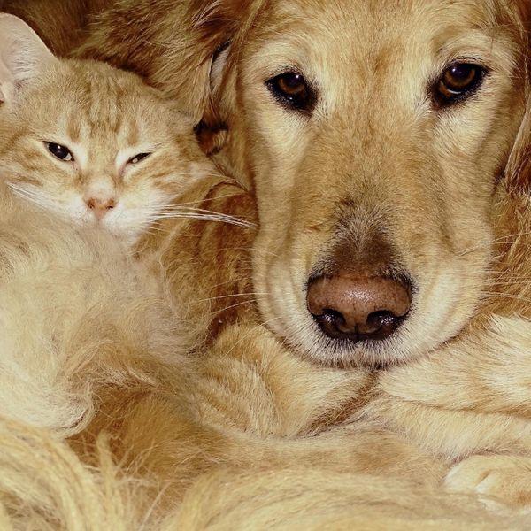 Tierfreundlicher Berater gesucht