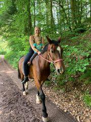 Pferd sinderella