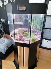 8 Eck Mp Aquarium