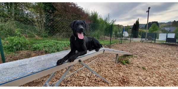 Tierschutz Labrador Merlin 4 Jahre