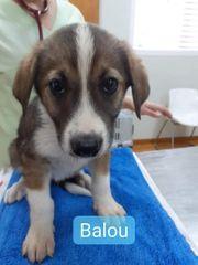 Balou will Reisen