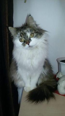 Entlaufen, Entflogen - Katze vermisst