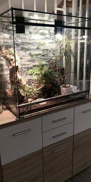 Terrarium mit Besatz