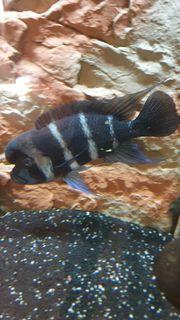 Grosses Aquarium 450 Liter
